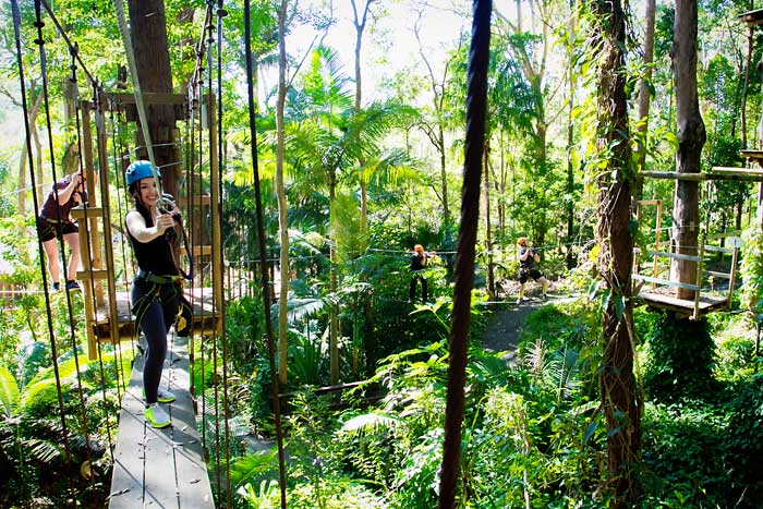 Awesome Rainforest