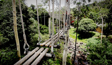 Suspended Log Bridges 15m high