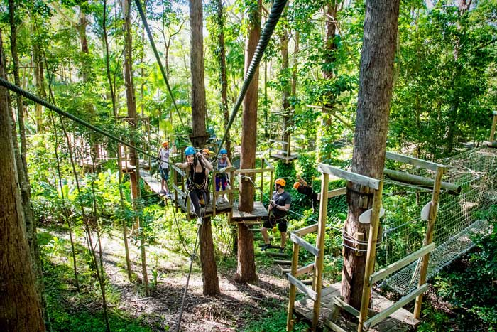 Awesome TreeTop Group Activity