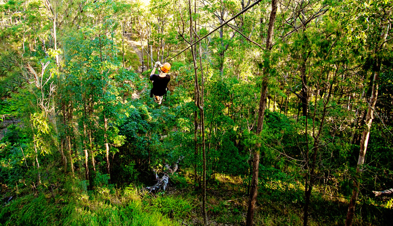 Amazing Bushland In The TreeTops